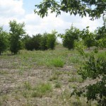 4.68 Acre Lot for sale in Kyle TX